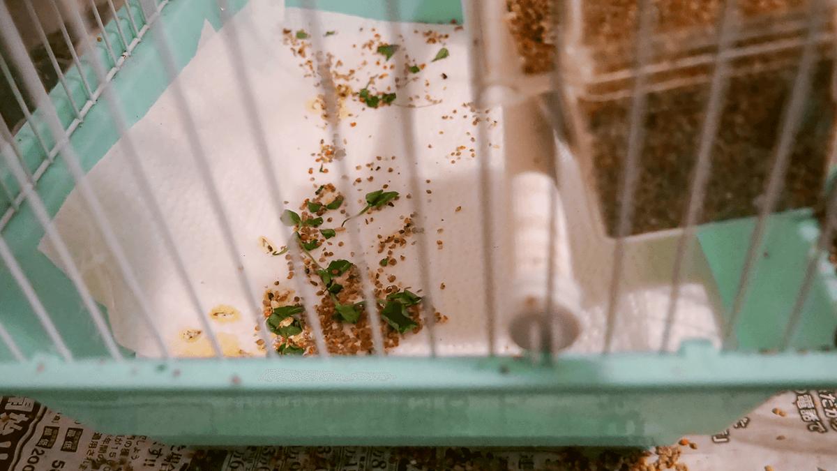 ゲージ内に撒き散らされた餌たち